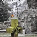 Gravestones in St Helens
