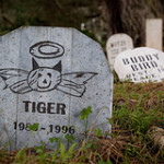 Pet Memorials in Wirral