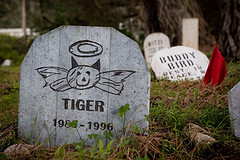 Pet Memorial Stones in Wirral